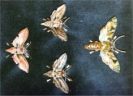 Moth Brooches